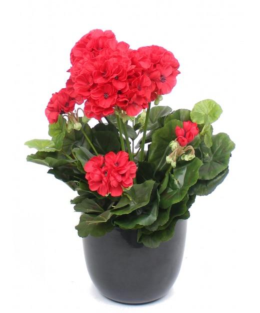 Géranium artificiel rouge