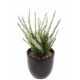 Dracaena artificiel fragrans