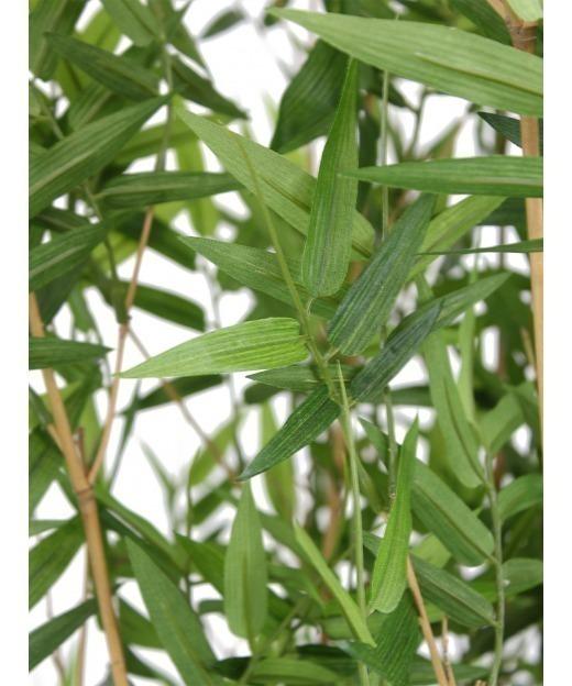 Dracaena sanderiana artificiel 145 cm