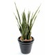 Sansevieria artificiel langue de belle mère