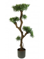 Podocarpus artificiel racines