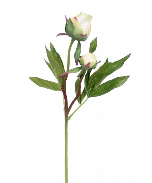 Pivoine herbacée artificielle
