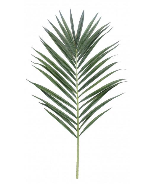 Feuille de palmier majestueux