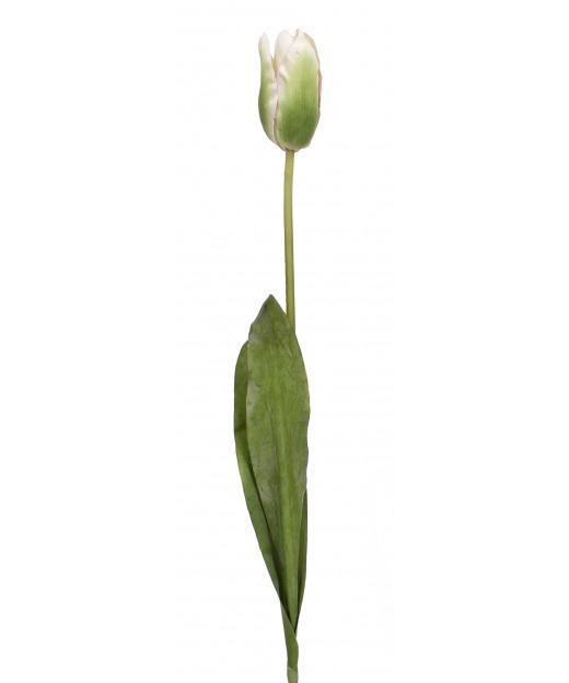 Tulipe verte et blanche