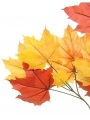Feuille de platane automne