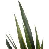 Aloe ferox artificiel