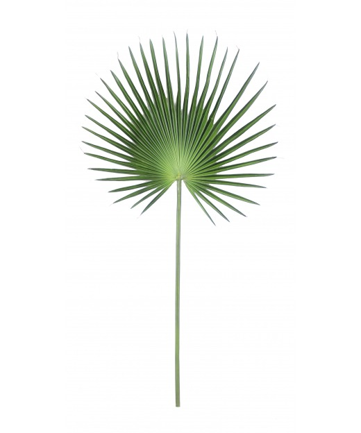 Palme de Chusan artificielle géante