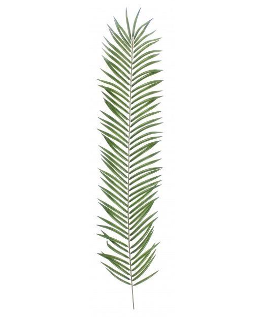 Feuille de palmier phoenix