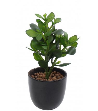Arbre de jade artificiel