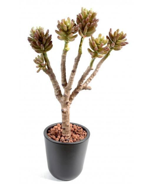 Succulente artificielle 6 têtes 40 cm