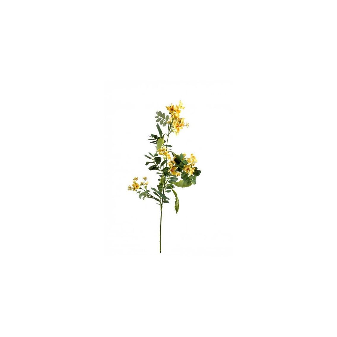 Acacia 55 cm