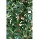Pittosporum artificiel