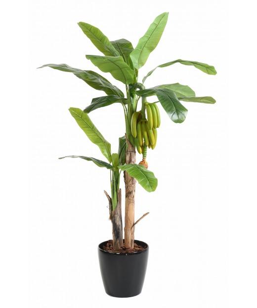 Bananier et bananes multiples 180 cm