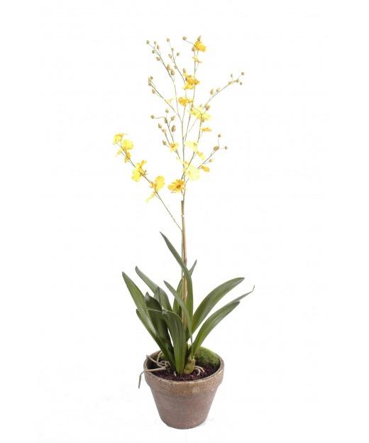 Orchidée fleurie en pot 90 cm