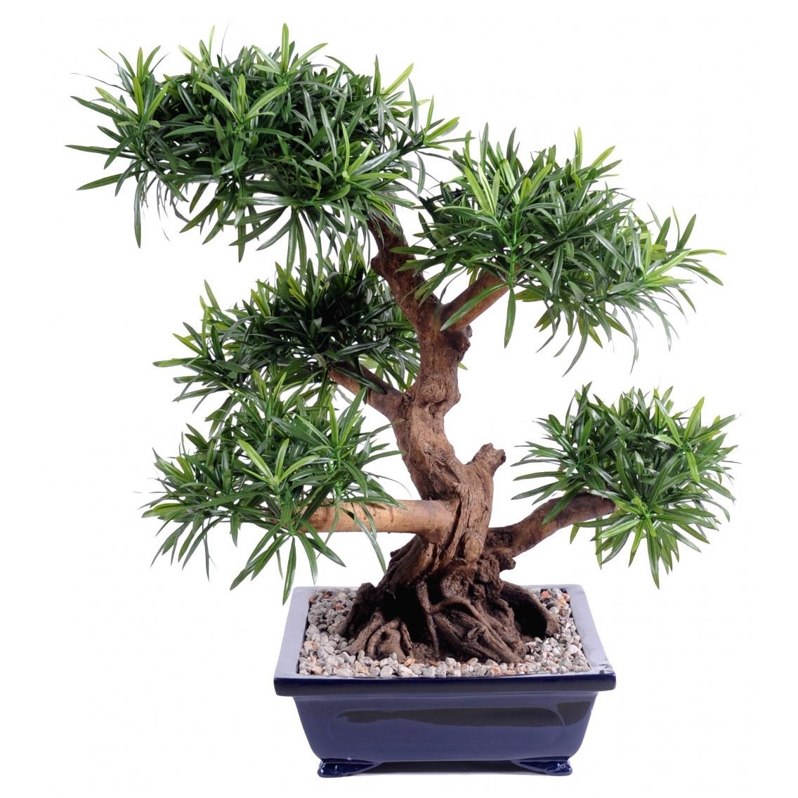 Bonsaï podocarpus