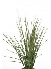 Fausse herbe des marais