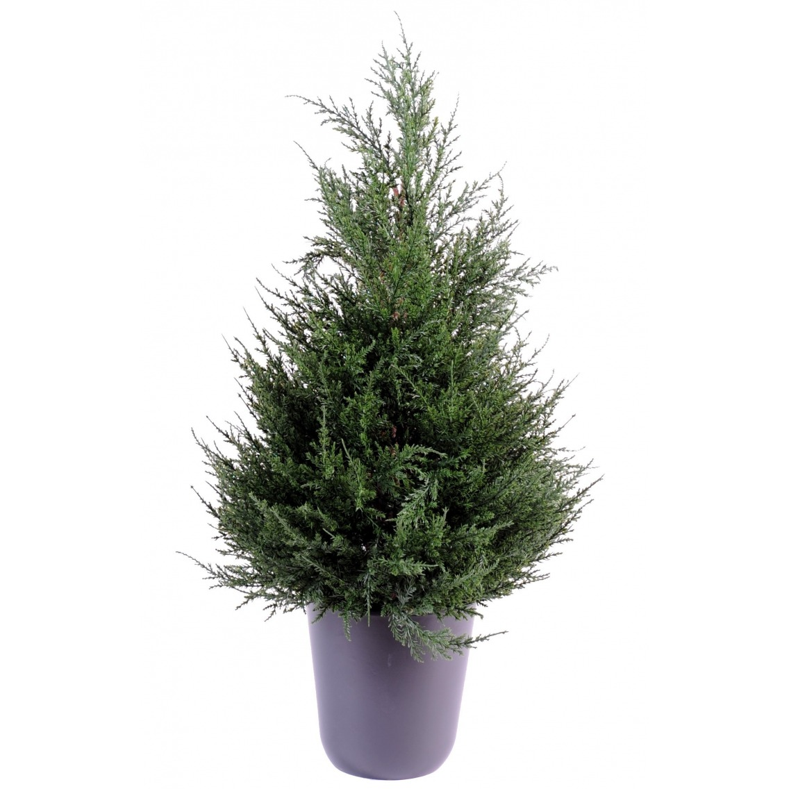 cypr s artificiel juniperus en pot 65 cm cypr s artificiels artiplantes. Black Bedroom Furniture Sets. Home Design Ideas