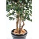 Ficus synthétique exotica
