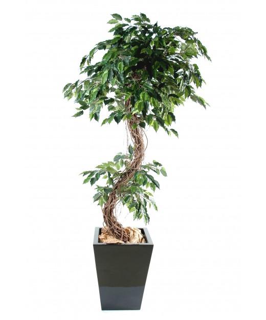 Ficus nitida artificiel 200 cm