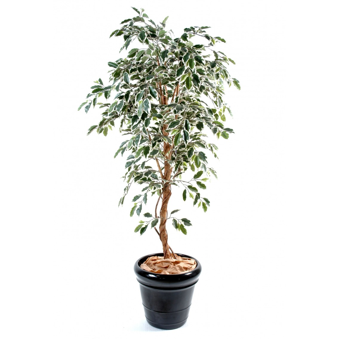 Ficus artificiel vert blanc artiplantes for Ficus artificiel