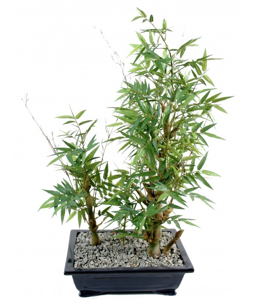 Bonsai artificiel bambou 35 cm