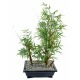 Bonsai artificiel bambou