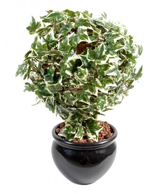Lierre boule feuillage vert blanc 30 cm