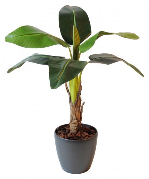 Bananier artificiel pousse 105 cm