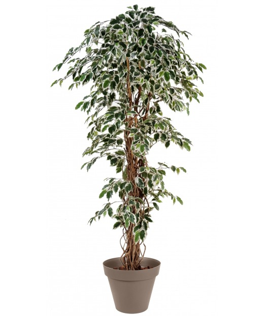 Ficus panaché artificiel 80 cm