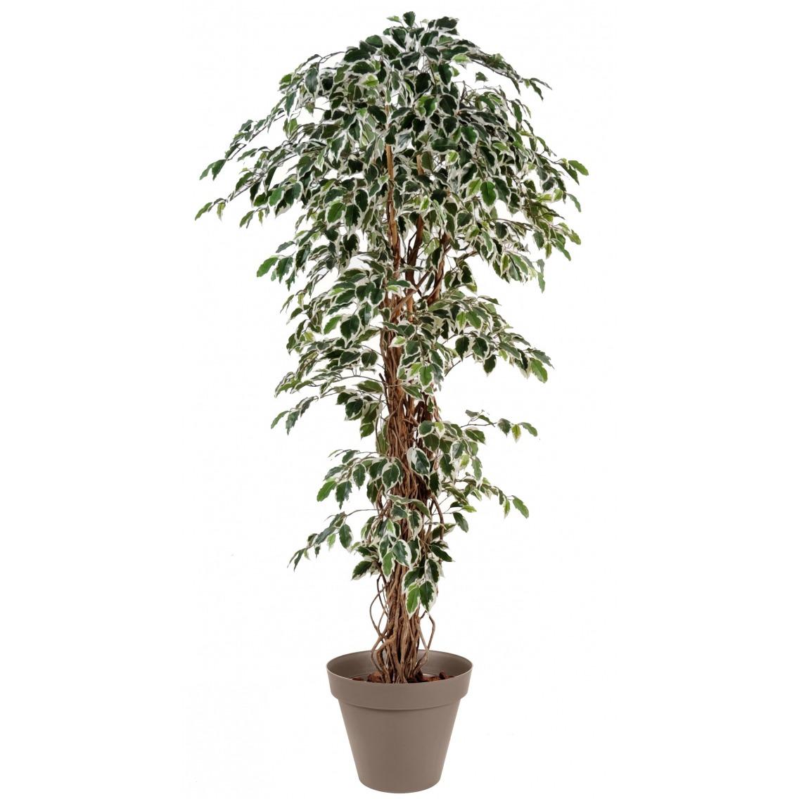 Ficus panaché artificiel