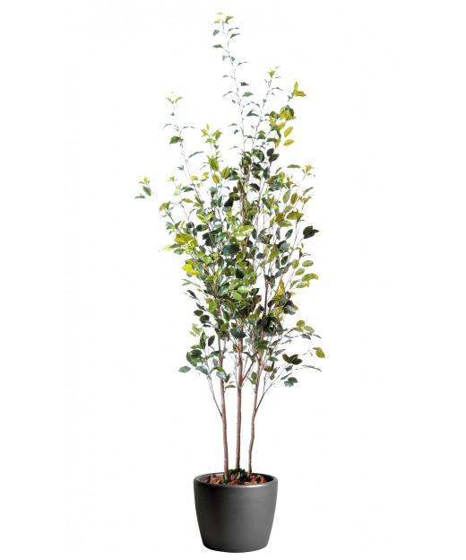 Ficus artificiel trois troncs 180 cm