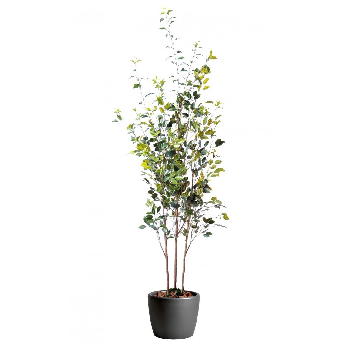 Ficus artificiel trois troncs