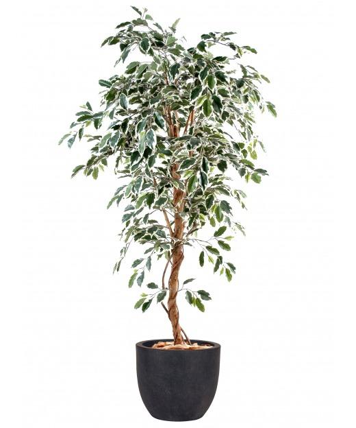 Ficus artificiel vert blanc 120 cm