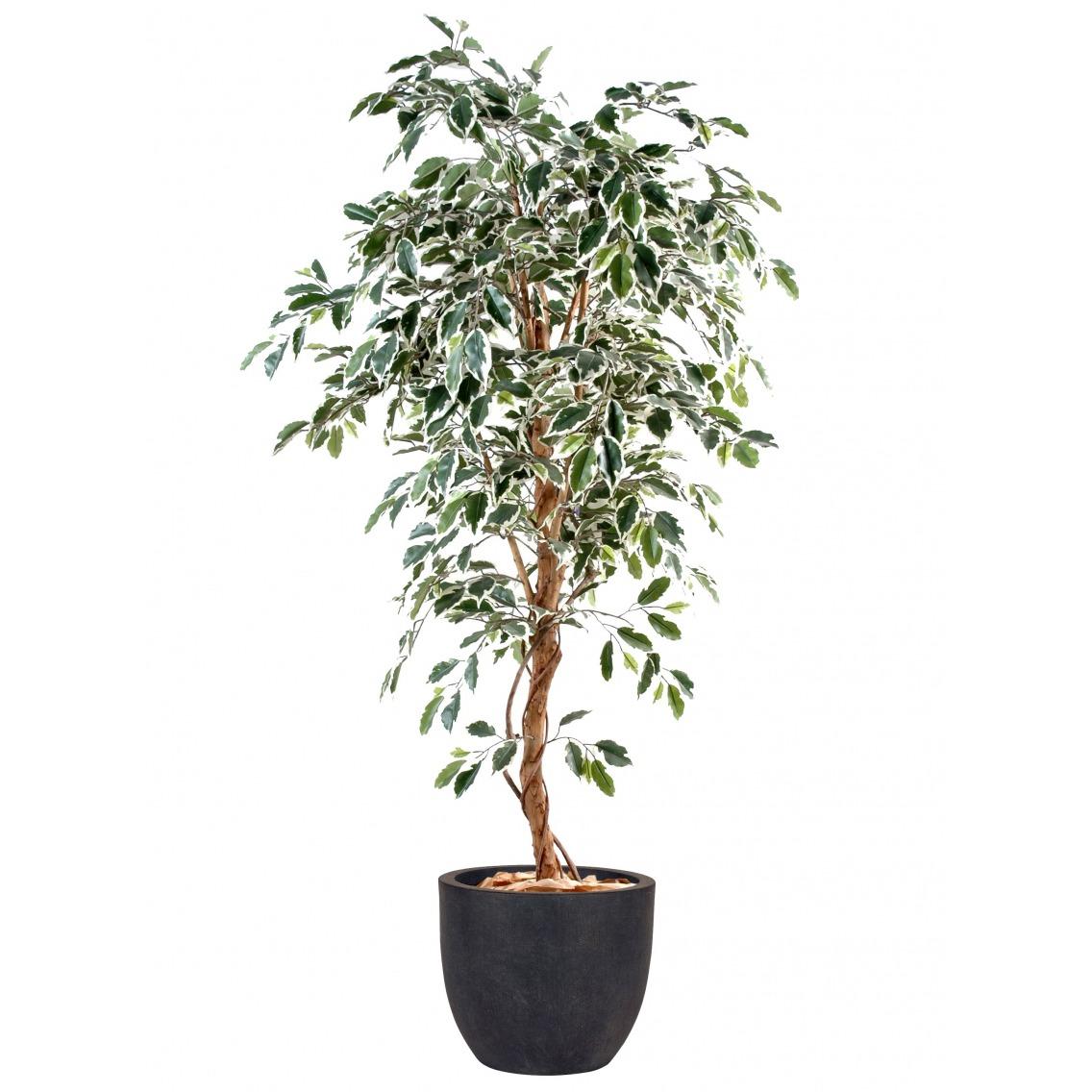 Ficus artificiel vert blanc