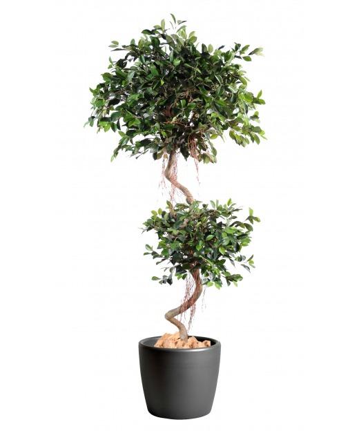 Ficus artificiel à deux têtes 185 cm