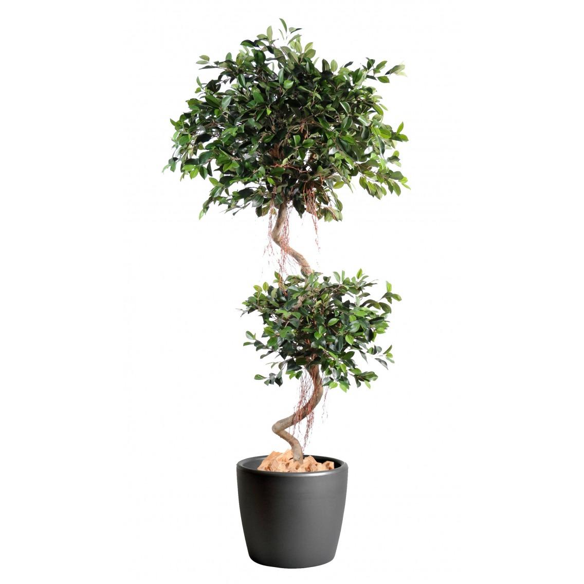 Ficus artificiel à deux têtes