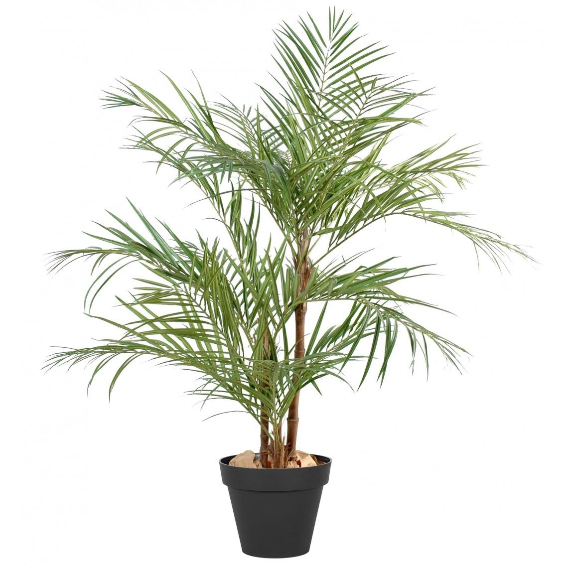 Grand palmier areca