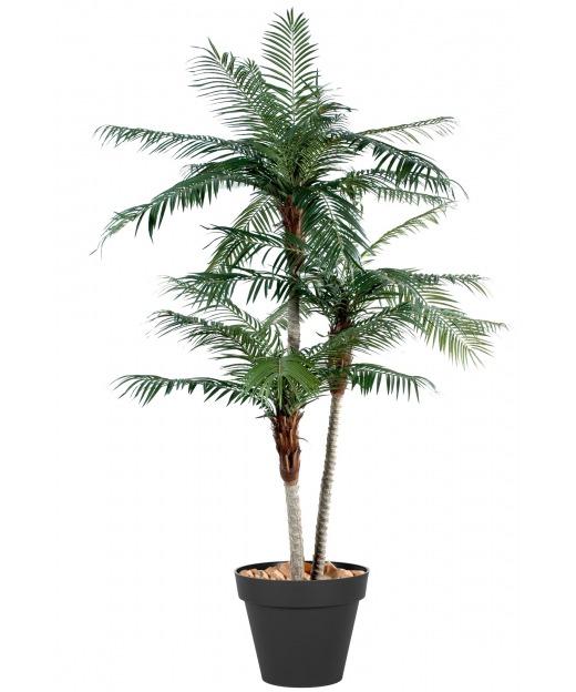 Palmier phoenix trois troncs 225 cm