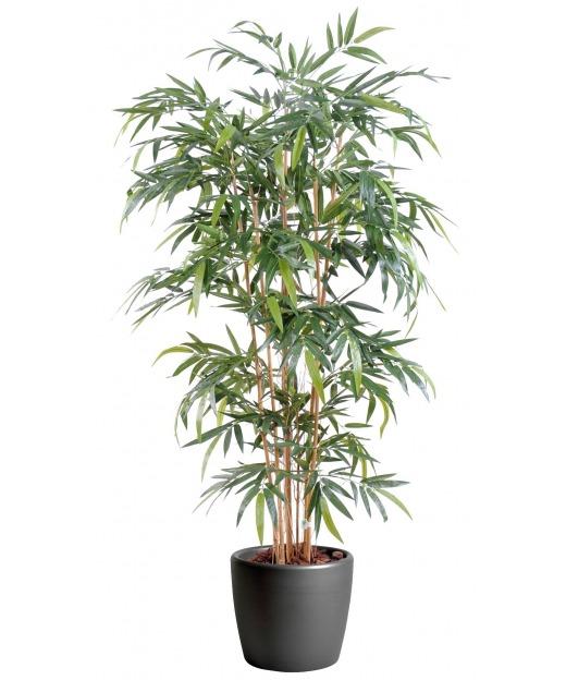Faux bambou kimmei 80 cm