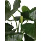 Alocasia artificiel