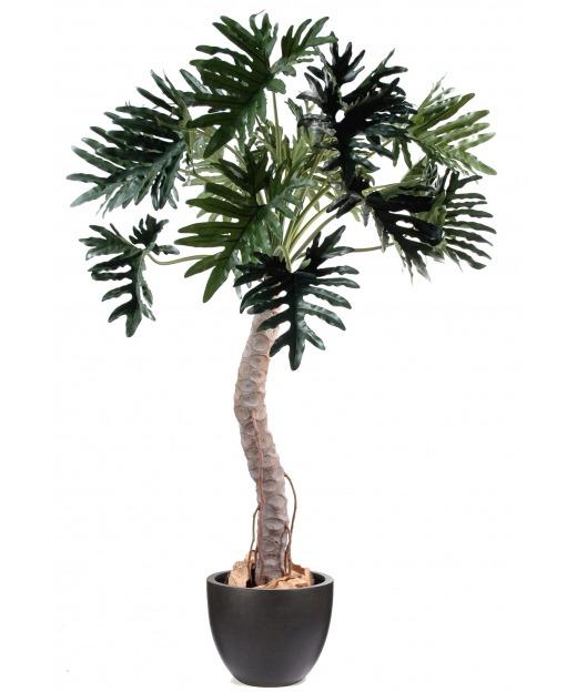 Philodendron géant