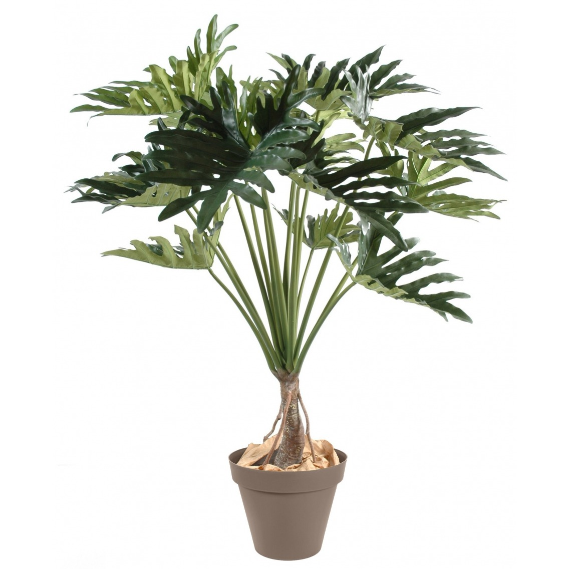 Philodendron selloum artificiel