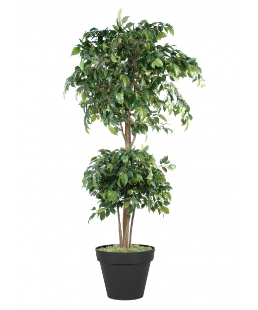 Ficus artificiel banian 60 cm