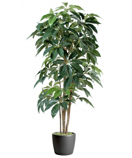 Schefflera artificiel arbres artificiels tropicaux pour for Arbre artificiel pour interieur