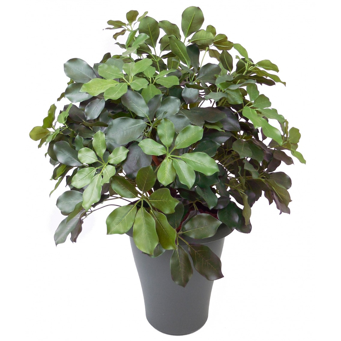 Schefflera artificiel buisson
