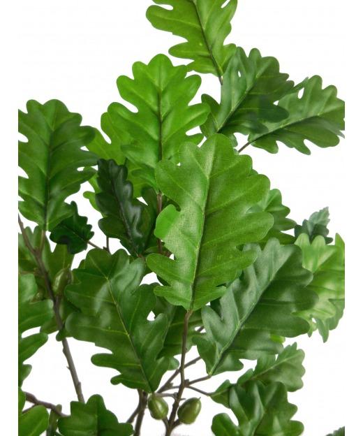 Arum maculatum 35 cm