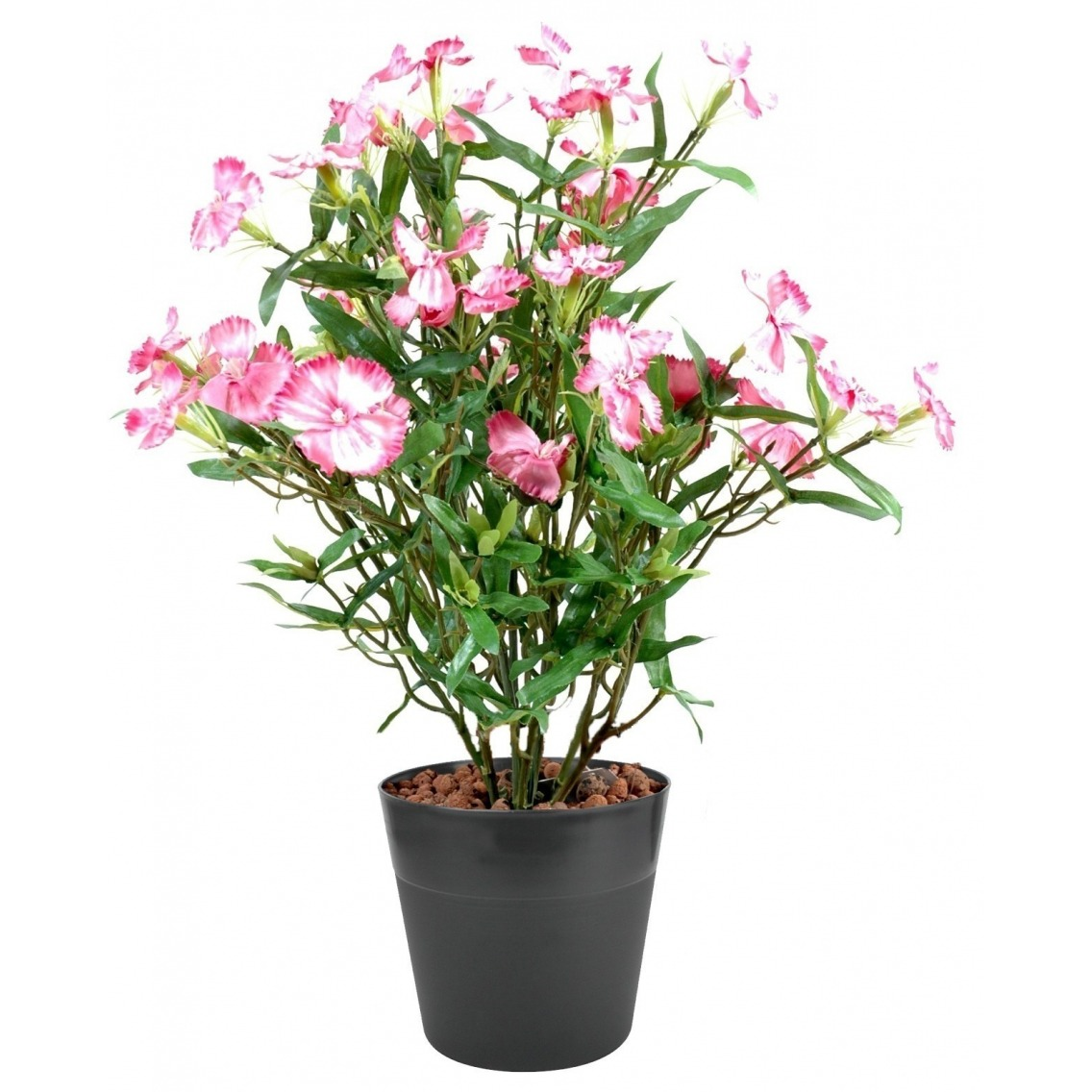 Dianthus artificiel