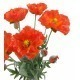 Coquelicot artificiel rouge