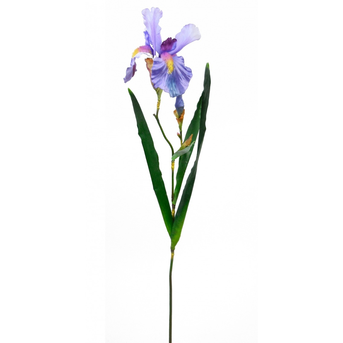 Iris versicolor artificiel
