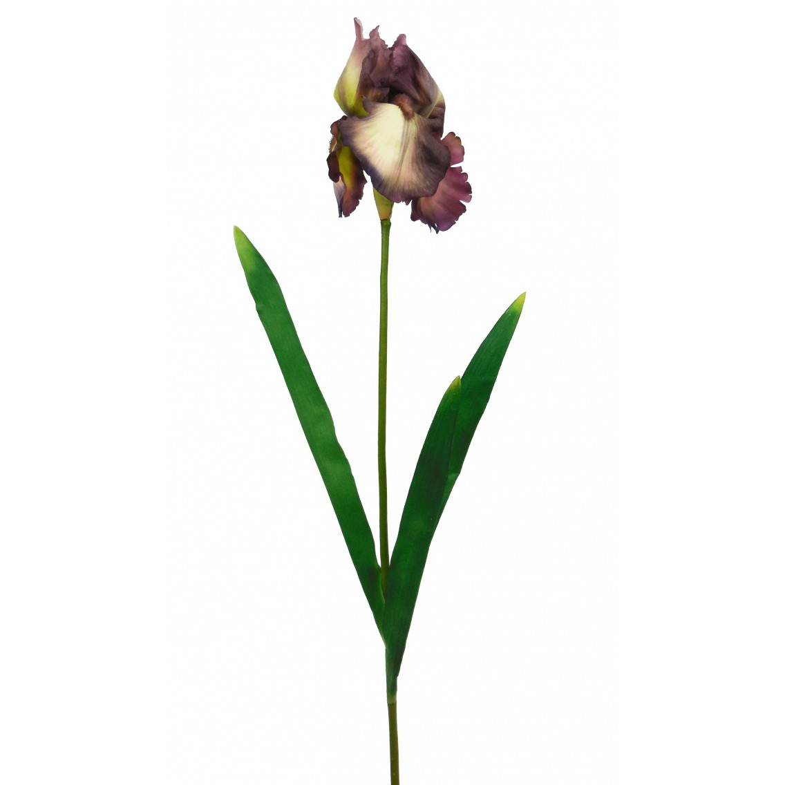 Fleur iris artificiellle